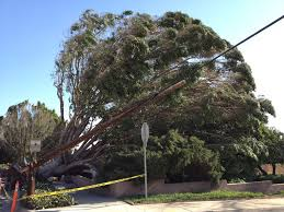 Windstorm Damage