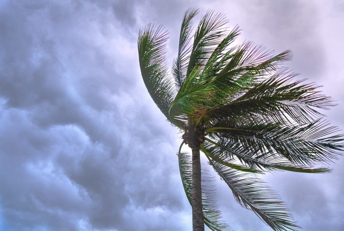 Tropical Storm Beryl Tested Storm Ravaged Puerto Rico