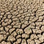 Drought Damage